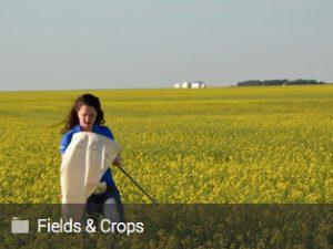 Fields & Crops