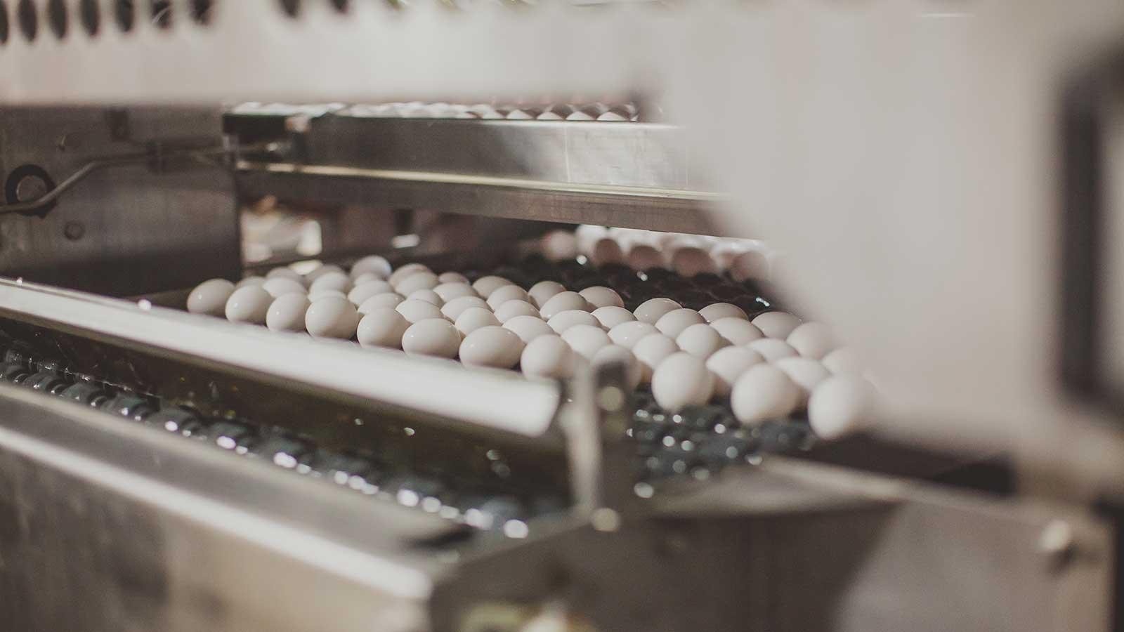 egg processing