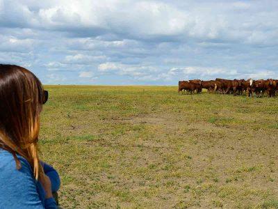 farm tour cattle