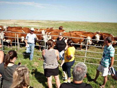Saskatchewan food production