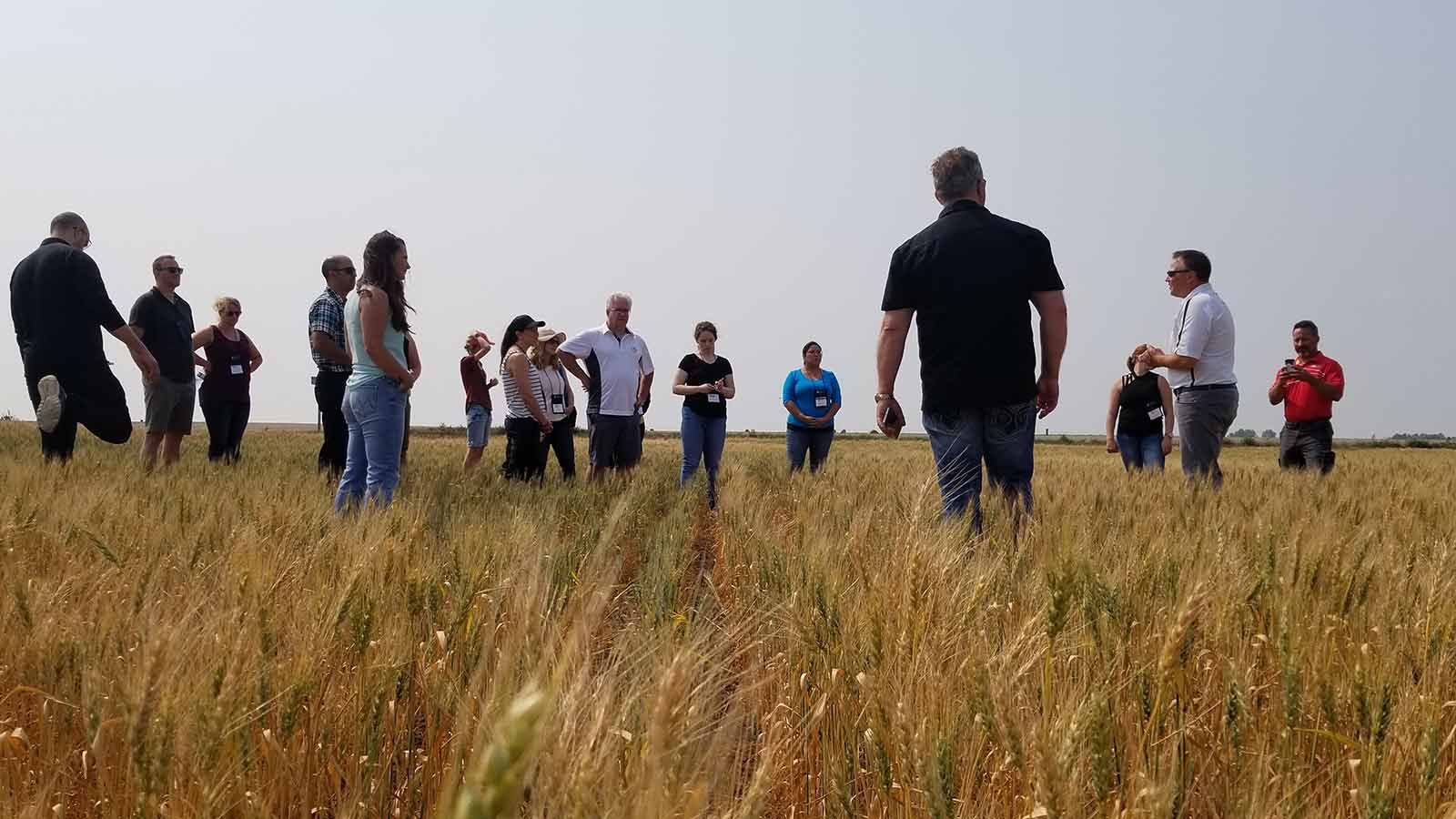 wheat field and tour participants